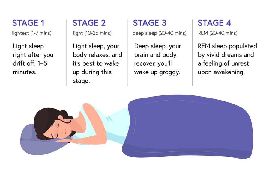the 4 sleep stages